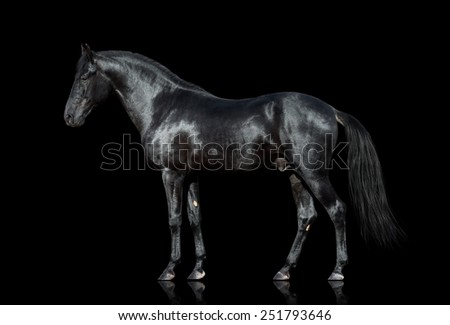 Black horse isolated on black background - stock photo
