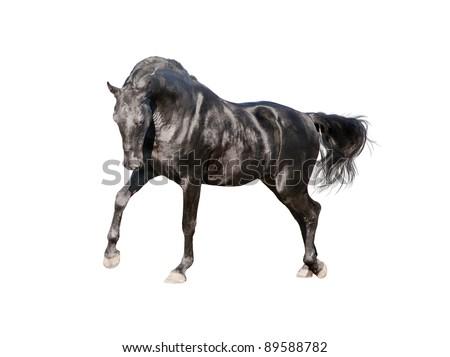 black horse isolated on white - stock photo