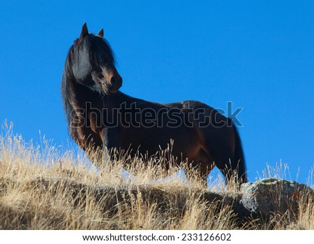 black horse on a background of blue sky - stock photo