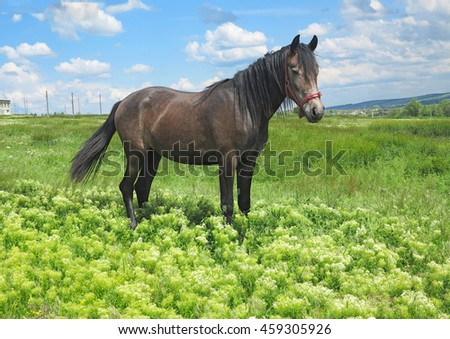 Black horse on a green meadow in a spring day - stock photo