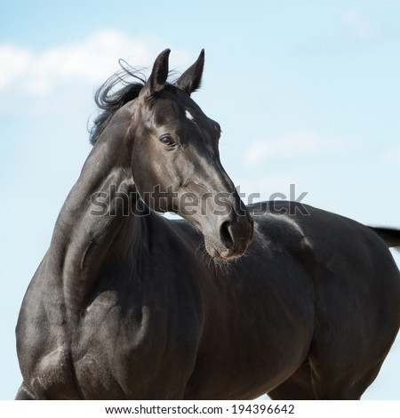 Black horse portrait on sky background - stock photo