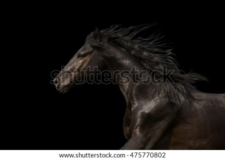 horses running stock images royaltyfree images amp vectors