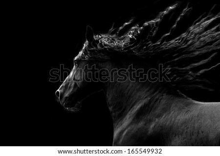 Black horse running on black background - stock photo