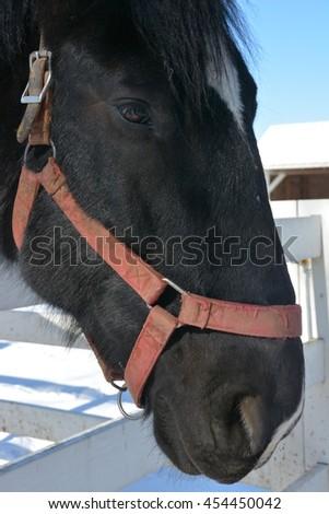 Black horse saying hello at carousel farm state park, wilmington, Delaware - stock photo