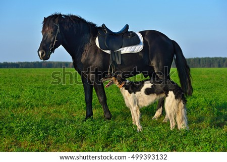 Black horse standing with borzoi dog on green field