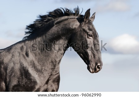 black horse with blue sky behind