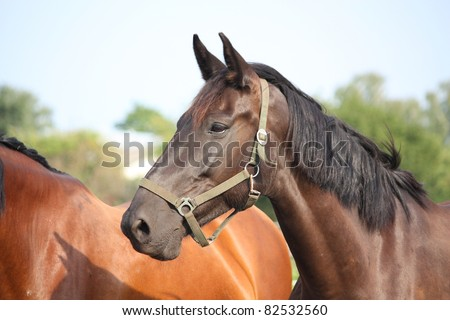 Black horse with halter