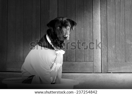 Black hybrid dog wearing red T-Shirt sitting in big bowl black and white version - stock photo