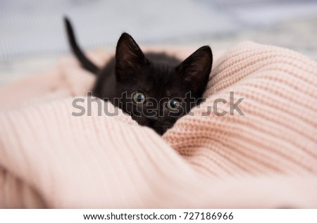 Black Kitten Hiding in Pink Sweater