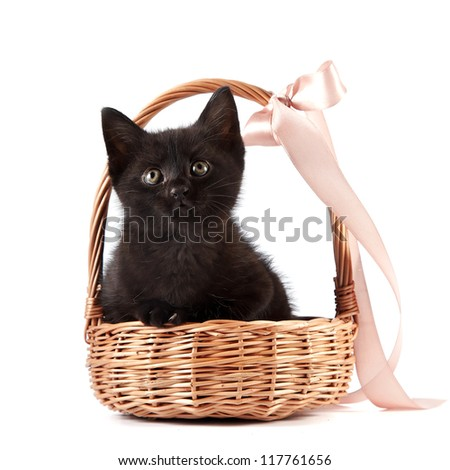 Black kitten in a wattled basket with a ribbon on a white background - stock photo