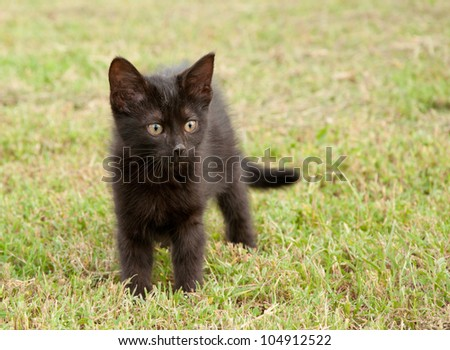 Black kitten in grass, with an alert look on her face - stock photo