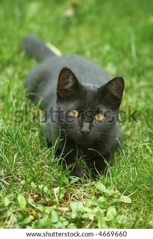 Black kitten in the grass - stock photo