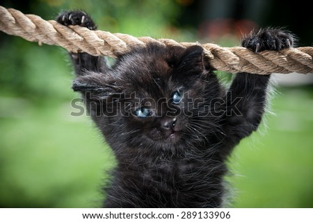 Black kitten is suspended from the rope