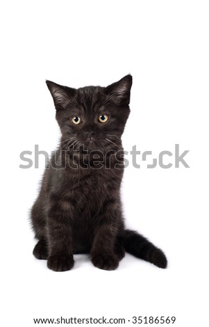 black kitten isolated on a white