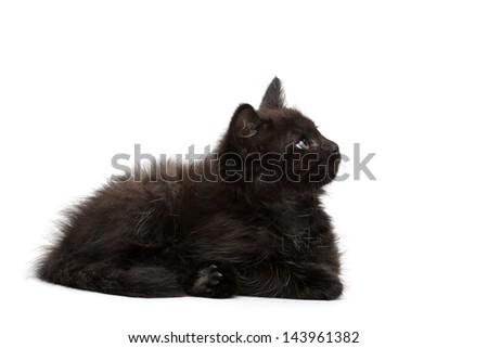 Black Kitten on a white background - stock photo