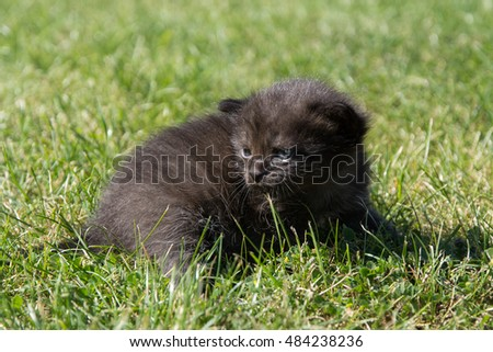 black kitten sitting on the grass and looking for mom
