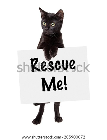 Black Kitten standing holding rescue me sign looking off to the side - stock photo