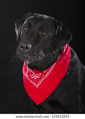Red Bandana Stock Images Royalty Free Images Amp Vectors