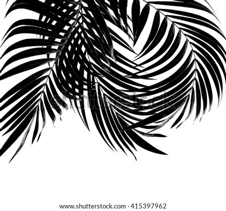 black leaf of palm tree background
