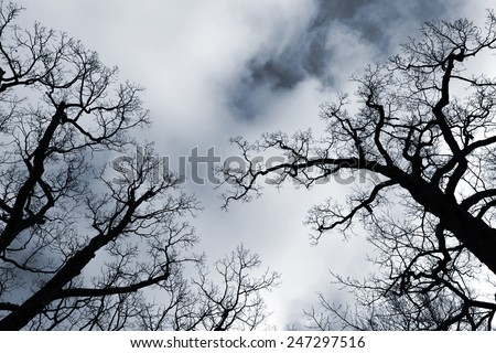 Black leafless trees silhouettes over dark blue cloudy sky
