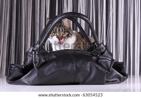 black leather bag with cat