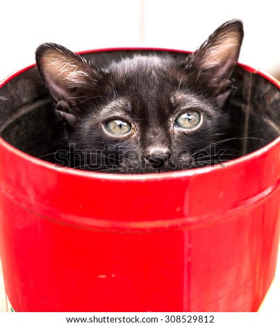 Black little kitten in red metal bucket, selective focus on its eye - stock photo