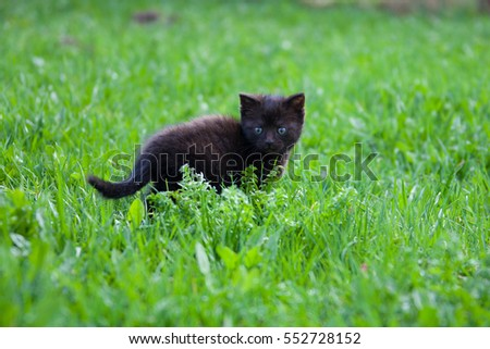 black little kitten in the grass