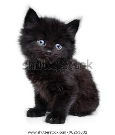 Black little kitten sitting down - stock photo
