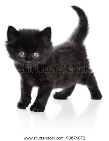 Black little kitten standing up on a white background - stock photo
