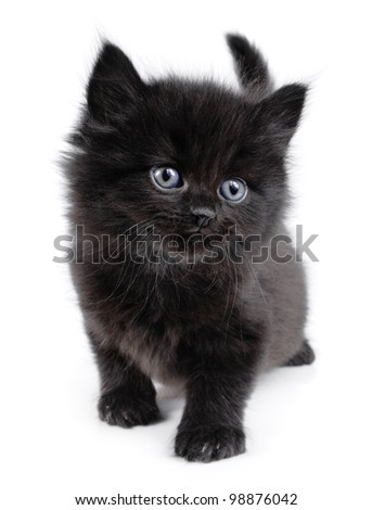 Black little kitten walking on a white background - stock photo