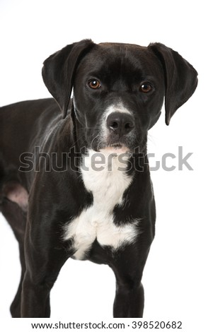 Black mixed breed dog
