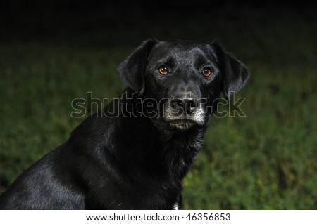 Black mixed-breed dog on the grass - stock photo
