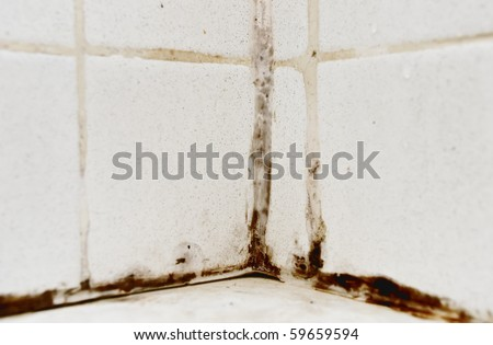 Black mold growing on shower tiles in bathroom - stock photo