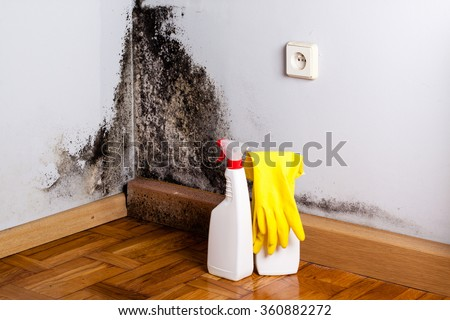 Black mold in the corner of room wall. Preparation for mold removal.  - stock photo