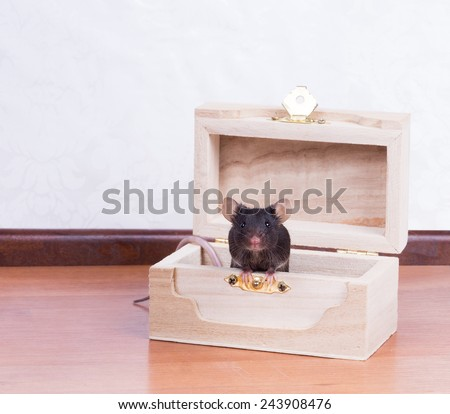 Black mouse in the chest - stock photo