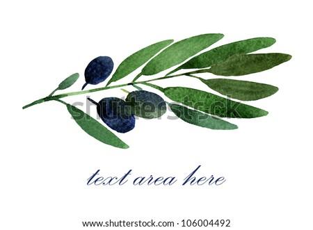 Black olives branch - stock photo