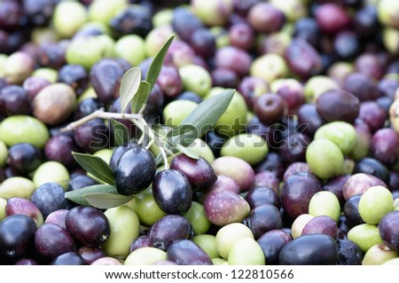 Black olives with leaves - stock photo