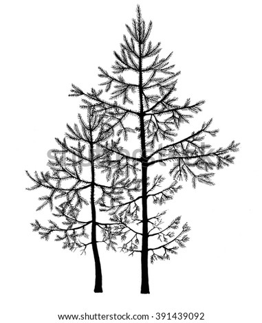 Black pen drawing of small fir-trees in a forest. Realistic hand-drawn illustration. - stock photo