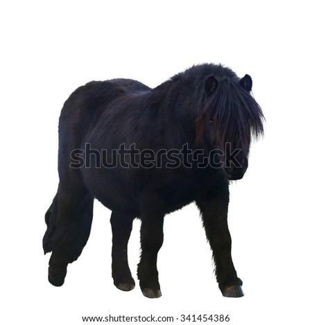 Black pony  isolated on white background - stock photo