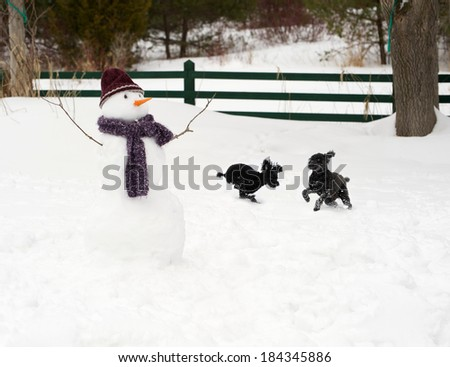 Black poodles having a great time, playing in the snow.  - stock photo