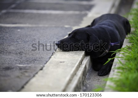 Black  portrait of young  dog - stock photo