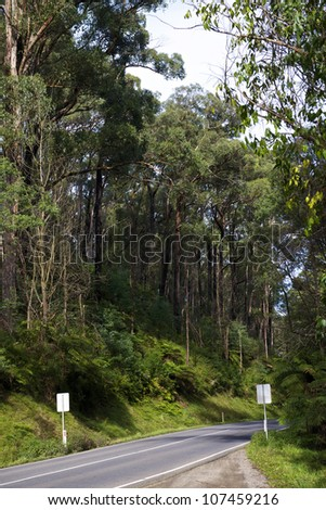 Black Range Forest, near Melbourne, Victoria, Australia - stock photo