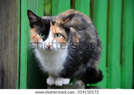 Black-red cat portrait - stock photo