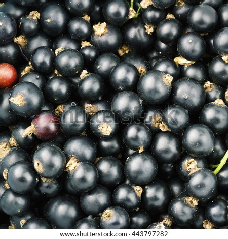 Black ripe currant berry top view, fruit background - stock photo