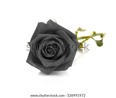 Black rose isolated on white background - stock photo