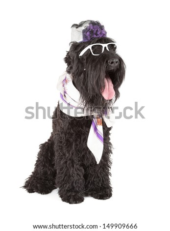 black russian terrier (BRT or Stalin's dog) - stock photo