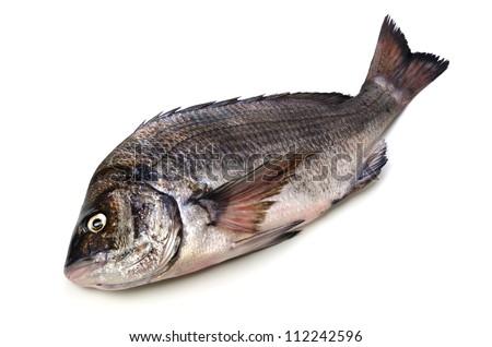 black sea bream - stock photo