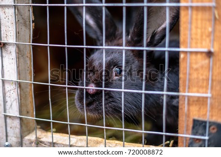 Black sick rabbit in the cage with myxomatosis