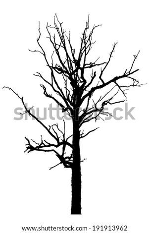 Black silhouette of a bare tree  - stock photo