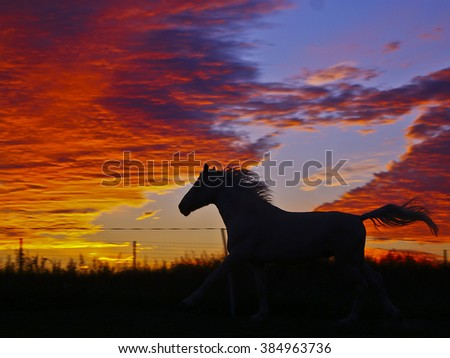 black silhouette of a running horse on a background of orange clouds in the evening